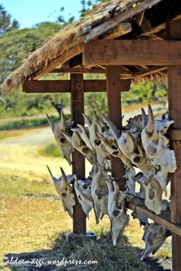 africa of java
