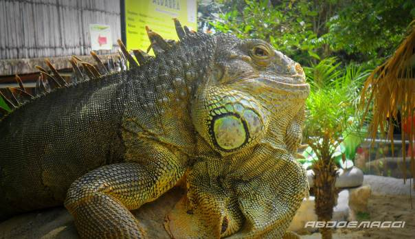 iguana.abdoemaggi.wp.com